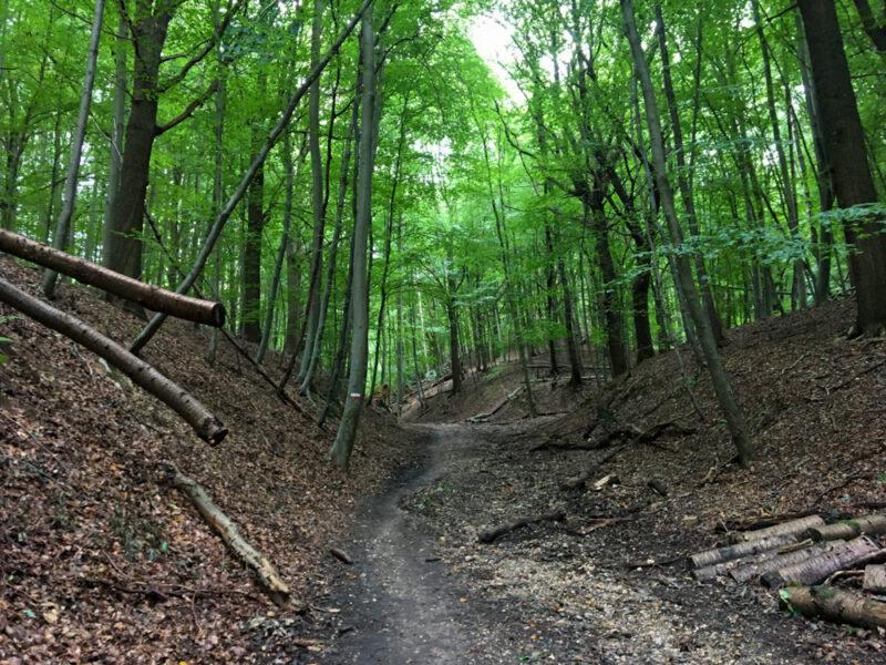 Groene Wissel Houthem – St. Gerlach: Geul en Grotten